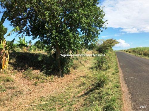 vente-terrain-2-5-hec-route-principale-andilana-nosyBe
