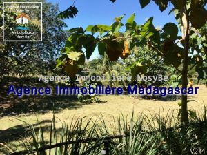 vente-terrain-orangea-nosybe-1.jpg