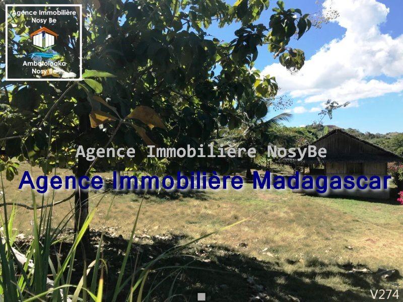 vente-terrain-orangea-nosybe-4.jpg