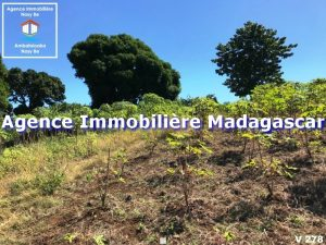 vente-terrain-belaza-nosybe-madagascar-2.jpg