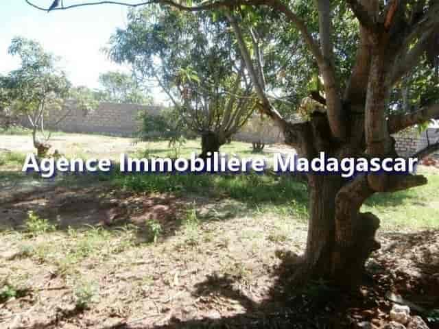 mahajanga-belobaka-vente-terrains-3-min.jpg
