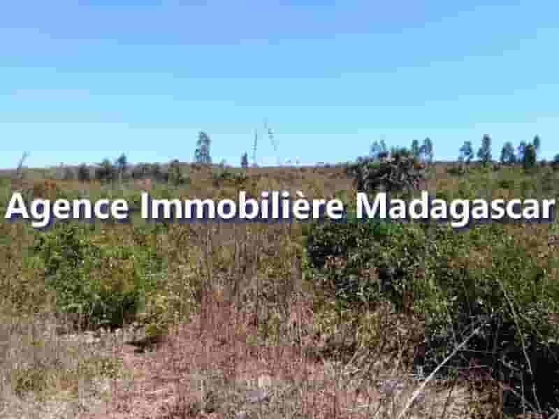 vente-terrain-mahajanga-ampazony-3-min.jpg