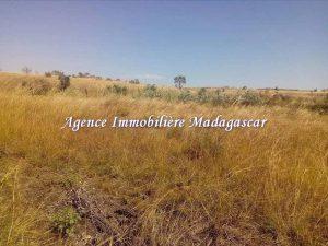 vente-terrain-agricole-mahajanga-1-1.jpg