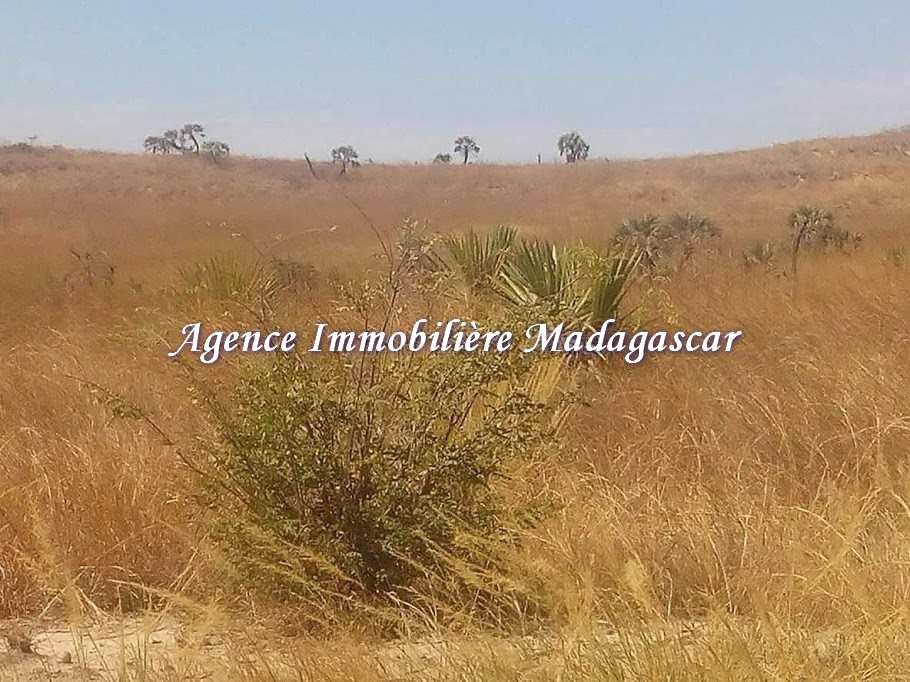 vente-terrain-agricole-mahajanga-1-2.jpg