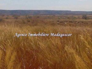 vente-terrain-agricole-mahajanga-1-3.jpg