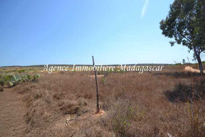 vente-terrain-quinze-hectares-mahajanga-1.jpg