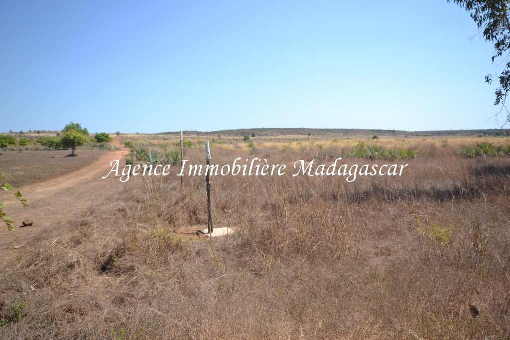 vente-terrain-quinze-hectares-mahajanga-4.jpg