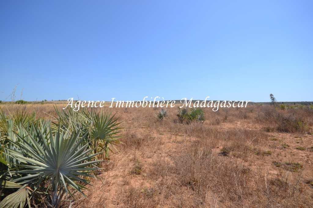 vente-terrain-quinze-hectares-mahajanga-5.jpg
